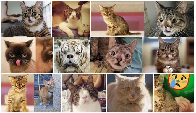 chat trisomique
