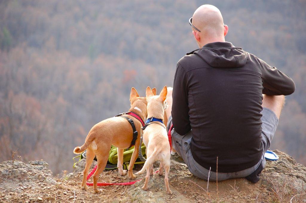 chiens randonnee